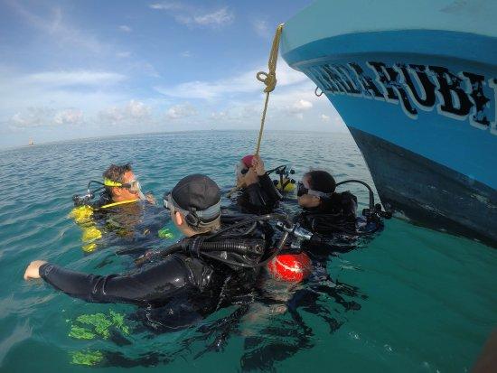 Arrecifes de Tuxpan: Buceando en el sistema arrecifal de Tuxpan.