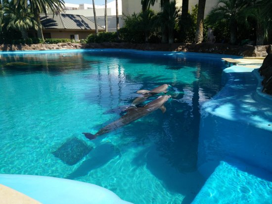 Dolphins At Mirage Picture Of Siegfried Roy 39 S Secret Garden And Dolphin Habitat Las Vegas