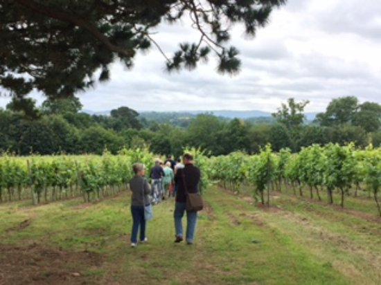 Pulborough, UK: Walking in the Vines