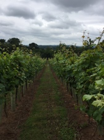 Pulborough, UK: View of Stopham Vineyard