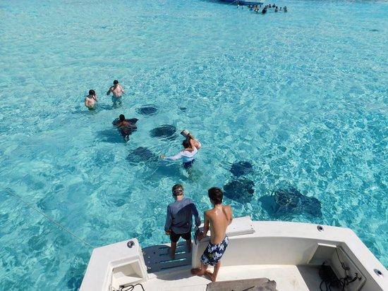 George Town, Grand Cayman: photo6.jpg