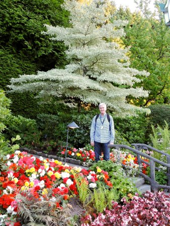 Butchart Gardens : This tree glowed from all angles