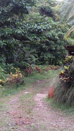 Marigot, Dominica: Route d'accès
