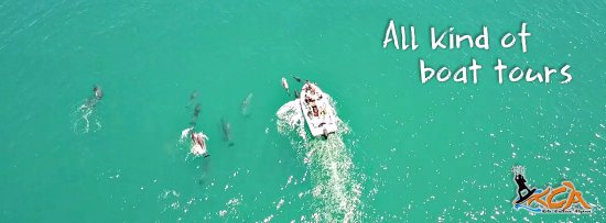 Fuseta, Portugal: We often go out to see the dolphins, you should come join us!