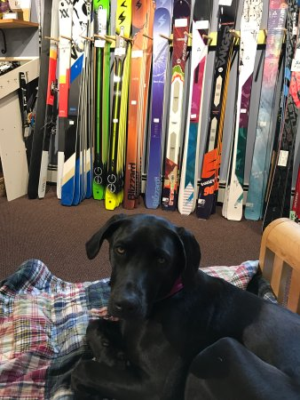 Киллингтон, Вермонт: Excellent selection of backcountry and telemark skis! And never short on a cute shop dog!