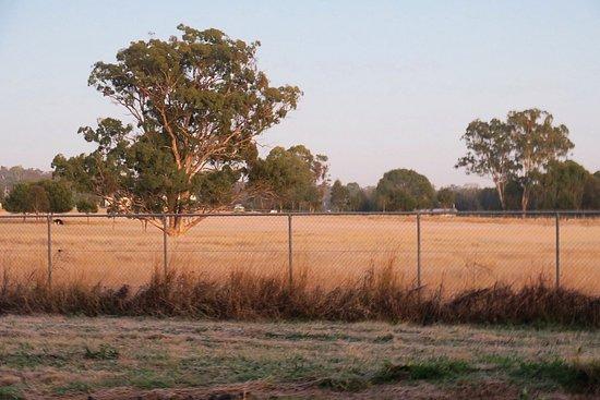 Warwick, Avustralya: photo1.jpg