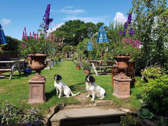 MAIN GARDEN WITH FRISBIE AND LULU - Picture of The Wheatsheaf ...