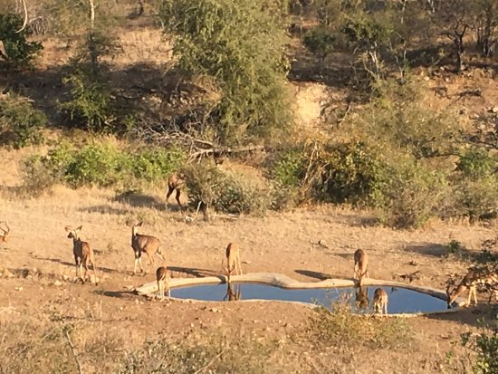 Sausage Tree Safari Camp: Watering Hole