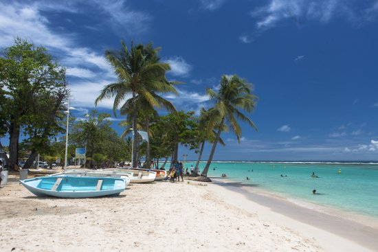 Sainte-Anne, Guadeloupe: Anse de Ste. Anne, Grande-Terre, Guadeloupe. Yet another one of many stunning beaches in Guadelo