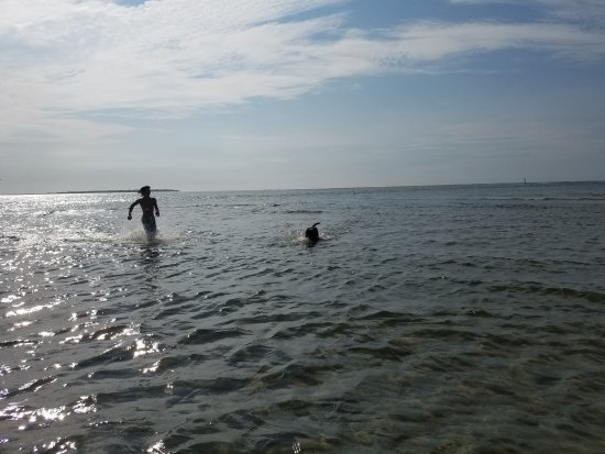 Hatteras, Caroline du Nord : Dog and son playing on a sandbar in middle of the ocean