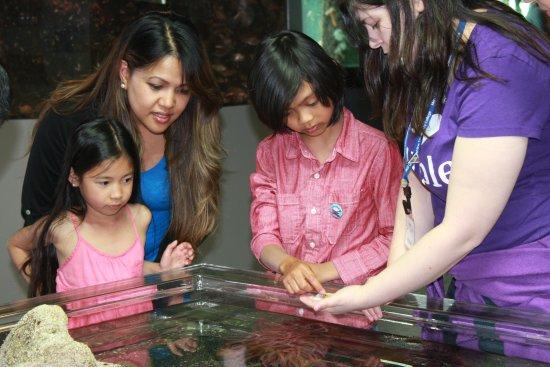 Des Moines, WA: MaST Center Aquarium Touch Tank