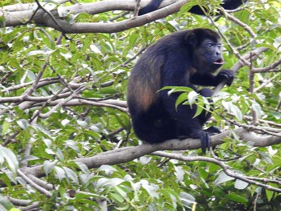 Province of Guanacaste, คอสตาริกา: Palo Verde National Park
