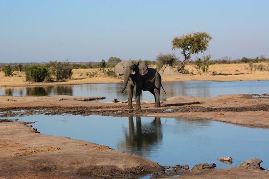 Bilde fra Hwange National Park