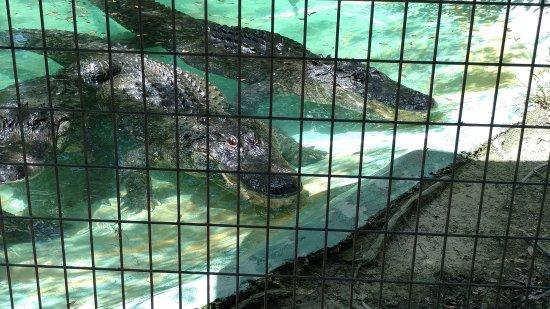 Isola Edisto, Carolina del Sud: Photo taken at the serpentarium.
