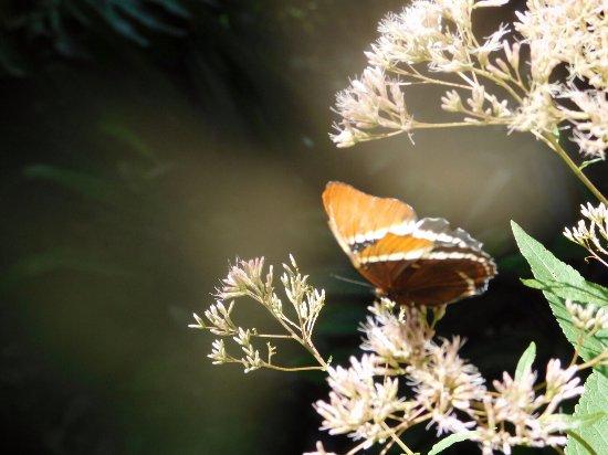 Butterfly Rainforest: Beautiful orange butterfly
