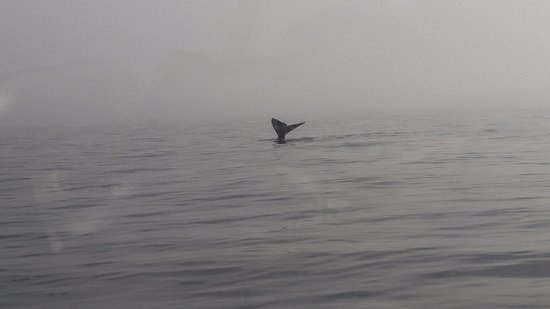 African Shark Eco-Charters: Whale!