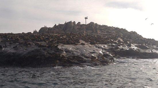African Shark Eco-Charters: Seal Island