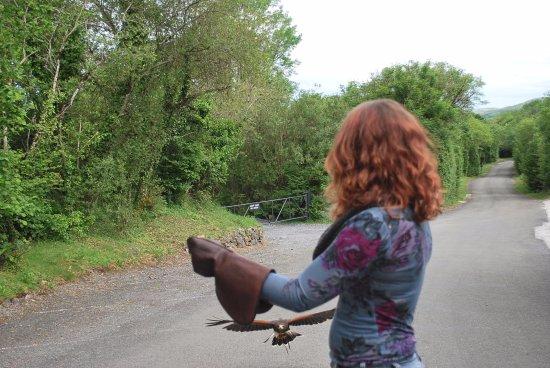 Ballyvaughan, Irlanda: coming in for a landing