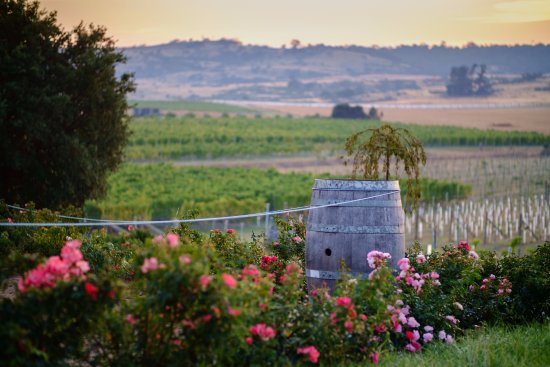 Cranbrook, Australien: View of the vineyard from the house