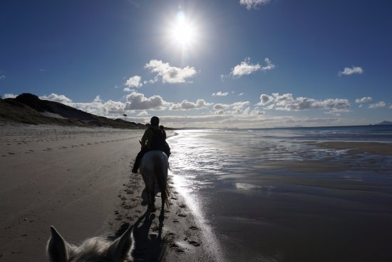 Wellsford, Nieuw-Zeeland: Trotting on the beach