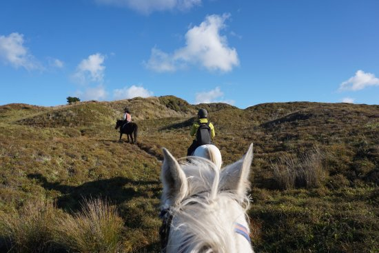 Pakiri Beach Horse Rides - Day Tours: Grassland