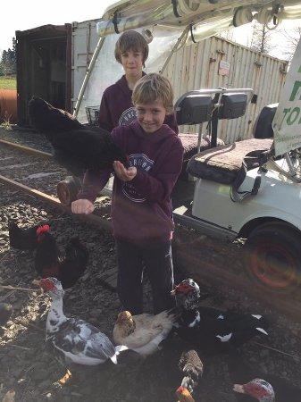 Вакатане, Новая Зеландия: Feeding some enthusiastic chickens.