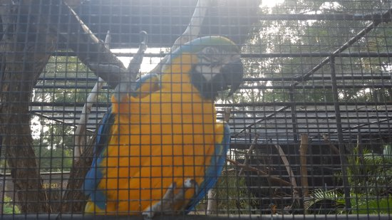 Rockhampton, Australien: Blue and Gold Macaw. this bird was very cheeky.