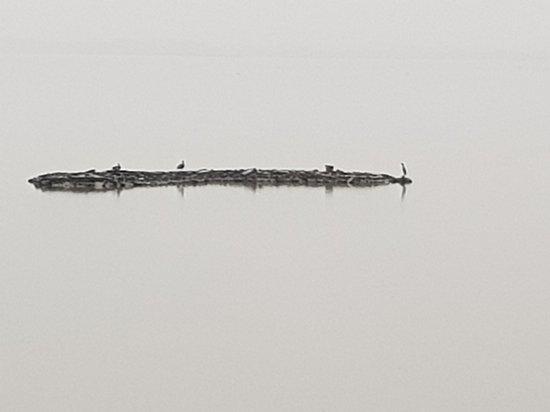 Lake Elementaita, Kenya: 20170722_071925_large.jpg