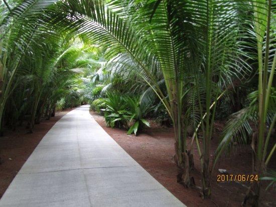 Tetiaroa, Polynesia thuộc Pháp: Path through resort