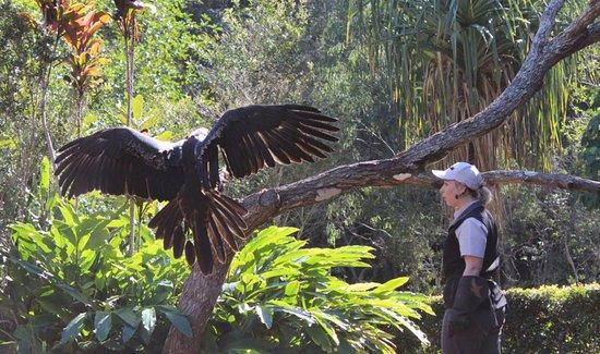 Currumbin, Australia: Free Flight Eagle