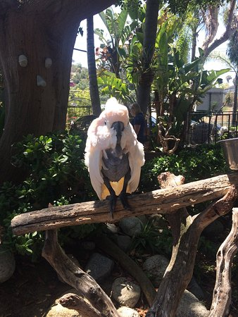 Дель-Мар, Калифорния: Free Flight Bird Sanctuary, July 21, 2017
