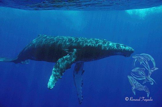 Dolphins & Whales Spirit Adventure