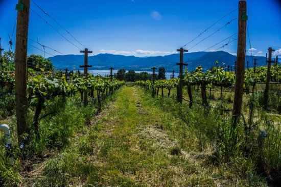 Penticton, Canada: Terravista Vineyards