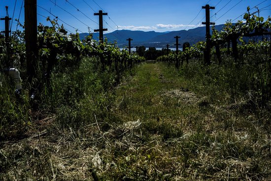 Terravista Vineyards