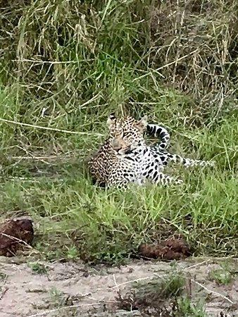 Ngala Private Game Reserve, Sudáfrica: photo1.jpg
