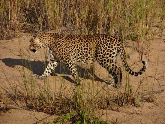 Ngala Private Game Reserve Photo