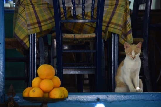 Blue Chairs: gatto e arance