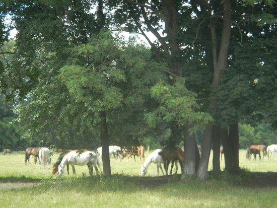 Myrhorod, Ucrânia: Дубровский конный завод