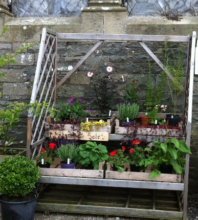 Kelso, UK: Come and check out our small, but vibrant range of plants.  Great prices! Wonderful value!