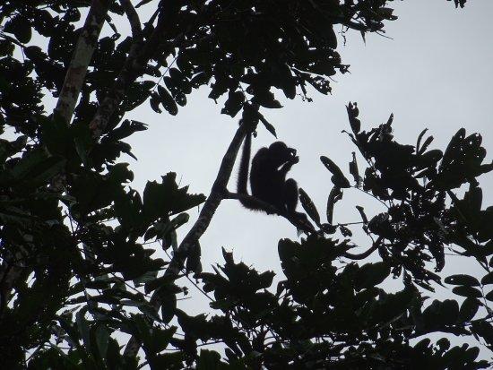 Tortuguero, Kosta Rika: photo2.jpg