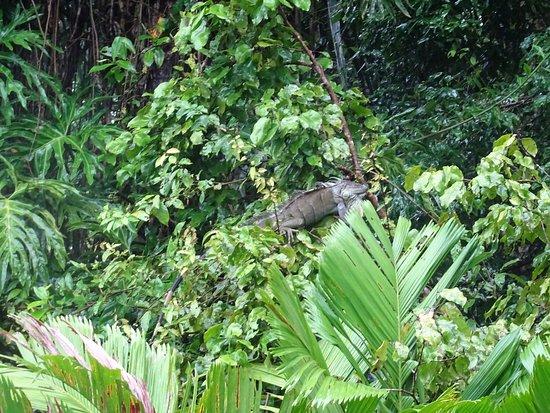 Tortuguero, Kosta Rika: photo3.jpg