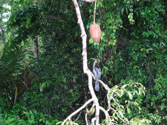 Tortuguero, Kosta Rika: photo5.jpg