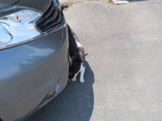 Cat's Shrine: レンタカーに体をこすっていました