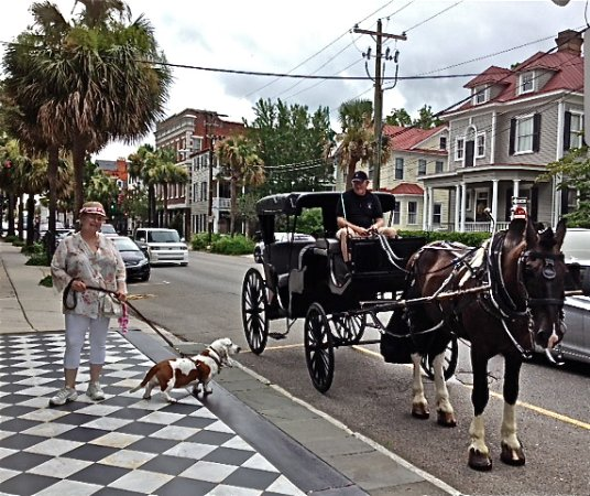 John Rutledge House Inn: This is our private dog friendly carriage ride that picked us up right in front of the JRH Inn.