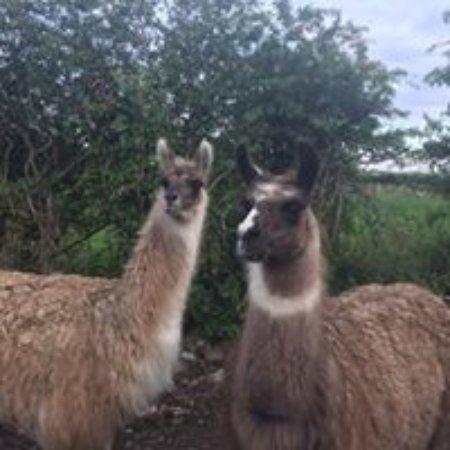 Newry, UK: New venture in progress, our animal farm,