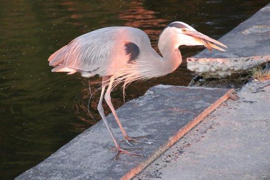 Cape Vincent, NY: He got his fish
