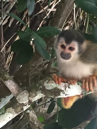 Santa Ana, Costa Rica: Squirrel Monkey on our transfer from La Fortuna to Arenal