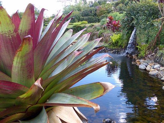 Maleny, Australia: So invigorating, so calm, no road noise, no dogs barking, I was at peace!