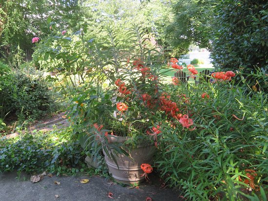 Solomons, MD: Lush Planting Throughout