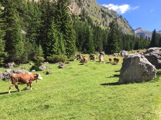 Selva di Val Gardena, Italia: IMG-20170716-WA0028_large.jpg